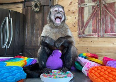 So geht Werbung: Ein süßer Affe auf TikTok!
